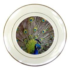 Peacock Bird Feathers Porcelain Plates by Simbadda