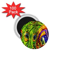 Peacock Feathers 1 75  Magnets (100 Pack)