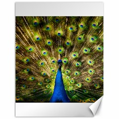 Peacock Bird Canvas 18  X 24   by Simbadda