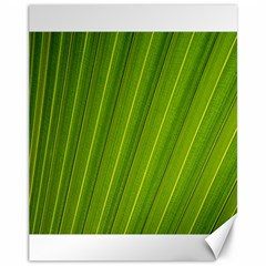 Green Leaf Pattern Plant Canvas 11  X 14   by Onesevenart