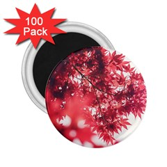 Maple Leaves Red Autumn Fall 2 25  Magnets (100 Pack)  by Onesevenart