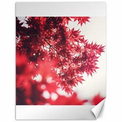 Maple Leaves Red Autumn Fall Canvas 18  X 24   by Onesevenart