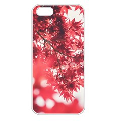 Maple Leaves Red Autumn Fall Apple Iphone 5 Seamless Case (white) by Onesevenart