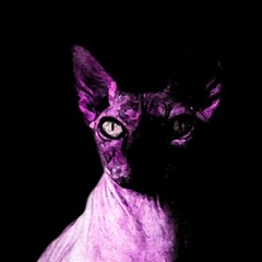 Pink Sphynx Cat Magic Photo Cubes by Valentinaart