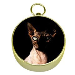 Sphynx Cat Gold Compasses by Valentinaart