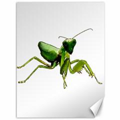 Mantis Canvas 36  X 48   by Valentinaart