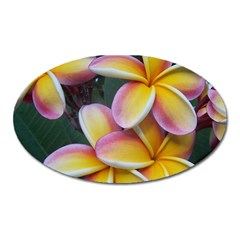 Premier Mix Flower Oval Magnet by alohaA