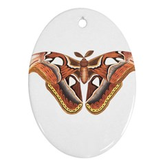 Butterfly Animal Insect Isolated Ornament (oval) by Simbadda