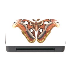 Butterfly Animal Insect Isolated Memory Card Reader With Cf by Simbadda