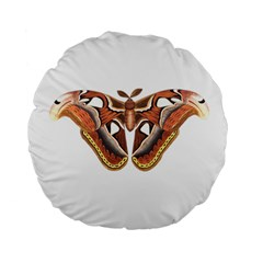 Butterfly Animal Insect Isolated Standard 15  Premium Flano Round Cushions by Simbadda
