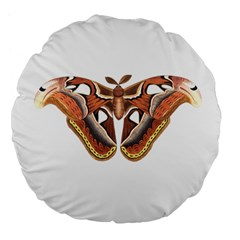 Butterfly Animal Insect Isolated Large 18  Premium Flano Round Cushions by Simbadda