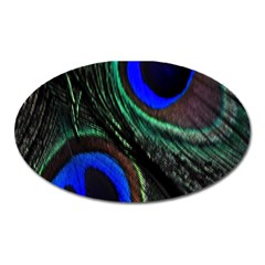 Peacock Feather Oval Magnet by Simbadda