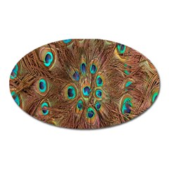 Peacock Pattern Background Oval Magnet by Simbadda