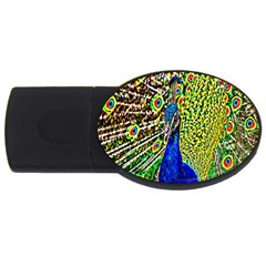 Graphic Painting Of A Peacock Usb Flash Drive Oval (2 Gb) by Simbadda