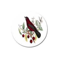 Bird On Branch Illustration Magnet 3  (round)
