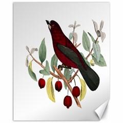 Bird On Branch Illustration Canvas 11  X 14   by Amaryn4rt