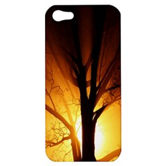 Rays Of Light Tree In Fog At Night Apple Iphone 5 Hardshell Case by Amaryn4rt