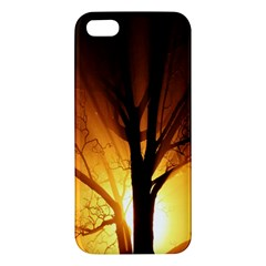 Rays Of Light Tree In Fog At Night Apple Iphone 5 Premium Hardshell Case by Amaryn4rt