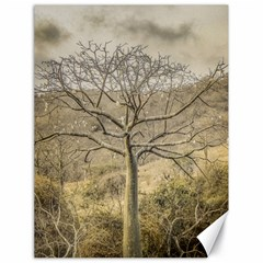 Ceiba Tree At Dry Forest Guayas District   Ecuador Canvas 18  X 24   by dflcprints