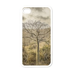 Ceiba Tree At Dry Forest Guayas District   Ecuador Apple Iphone 4 Case (white) by dflcprints