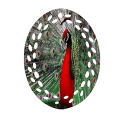 Red Peacock Oval Filigree Ornament (two Sides) by Simbadda