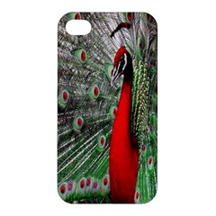 Red Peacock Apple Iphone 4/4s Premium Hardshell Case by Simbadda