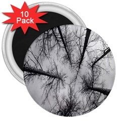 Trees Without Leaves 3  Magnets (10 Pack)  by Nexatart