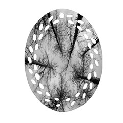 Trees Without Leaves Oval Filigree Ornament (two Sides) by Nexatart
