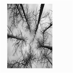 Trees Without Leaves Large Garden Flag (two Sides) by Nexatart