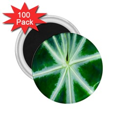 Green Leaf Macro Detail 2 25  Magnets (100 Pack)  by Nexatart