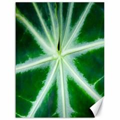 Green Leaf Macro Detail Canvas 18  X 24   by Nexatart