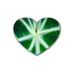Green Leaf Macro Detail Heart Coaster (4 Pack)  by Nexatart