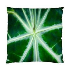 Green Leaf Macro Detail Standard Cushion Case (one Side) by Nexatart