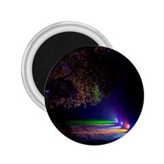 Illuminated Trees At Night 2 25  Magnets by Nexatart