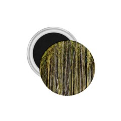 Bamboo Trees Background 1 75  Magnets by Nexatart