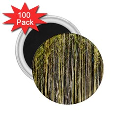Bamboo Trees Background 2 25  Magnets (100 Pack)  by Nexatart