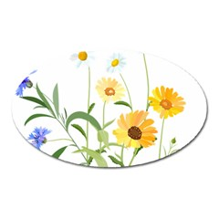 Flowers Flower Of The Field Oval Magnet by Nexatart