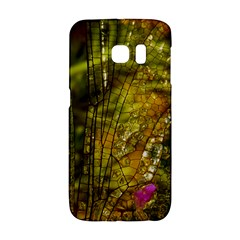 Dragonfly Dragonfly Wing Insect Galaxy S6 Edge by Nexatart