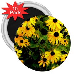 Walking Through Sunshine 3  Magnets (10 Pack)  by dawnsiegler