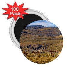 Group Of Vicunas At Patagonian Landscape, Argentina 2 25  Magnets (100 Pack)  by dflcprints