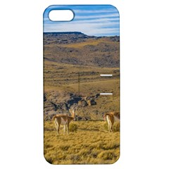 Group Of Vicunas At Patagonian Landscape, Argentina Apple Iphone 5 Hardshell Case With Stand by dflcprints