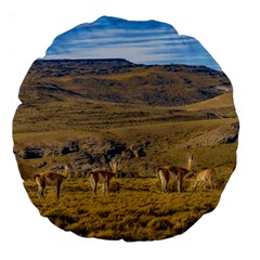 Group Of Vicunas At Patagonian Landscape, Argentina Large 18  Premium Flano Round Cushions by dflcprints