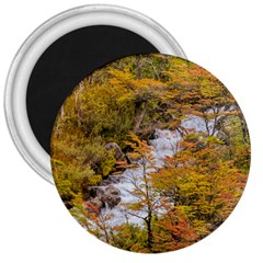 Colored Forest Landscape Scene, Patagonia   Argentina 3  Magnets by dflcprints