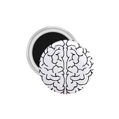 Brain Mind Gray Matter Thought 1 75  Magnets by Nexatart