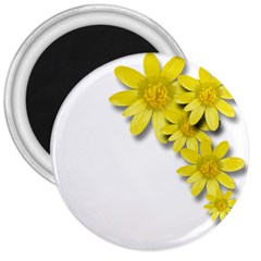 Flowers Spring Yellow Spring Onion 3  Magnets by Nexatart