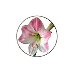 Flower Blossom Bloom Amaryllis Hat Clip Ball Marker (4 Pack) by Nexatart