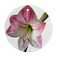 Flower Blossom Bloom Amaryllis Round Ornament (two Sides) by Nexatart