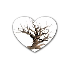 Tree Isolated Dead Plant Weathered Heart Coaster (4 Pack)  by Nexatart