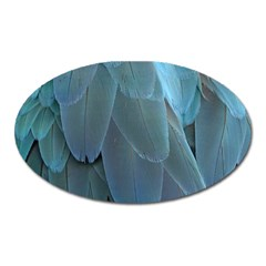 Feather Plumage Blue Parrot Oval Magnet
