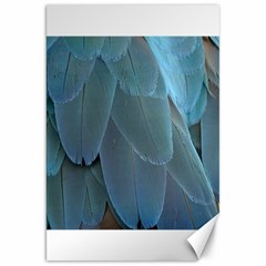 Feather Plumage Blue Parrot Canvas 20  X 30   by Nexatart